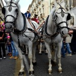 Mayors carriage with white horses on the 3rd February during the Saint Agatha festival in Catania