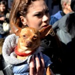 Dog spectacor during the Saint Agatha festival in Catania. February the 3rd